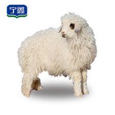 宁鑫 盐池滩羊 认养1只羊 2月龄乳羔羊认养 私人订制 生态有机饲养 出栏15-18