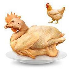 温氏 供港老母鸡 1.2kg (散养500天以上)*4件 109.68元包邮(需用券 折合27.42